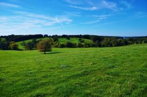Big Still Pasture