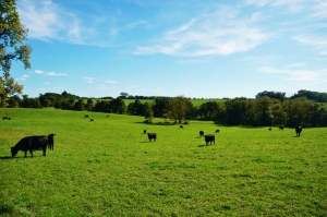 South City Pasture