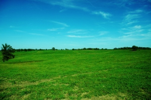 South Fescue Pasture