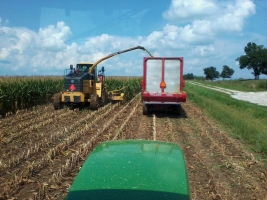 corn-silage